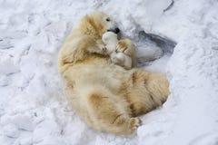 Polar bear with cub. Mother love. Family portrait of Polar bear with cub on snow. Mother love royalty free stock photo
