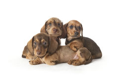 Family portrait of puppies Stock Photo