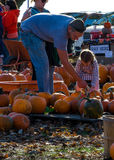 Family pumpkin Royalty Free Stock Images