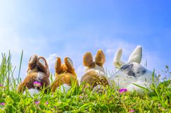 Family of rabbits Stock Images