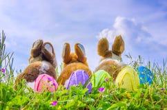 Family of rabbits Stock Photo