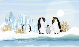 A family of realistic emperor penguins with a chick by the sea or ocean. Glacier and dry grass. Snow. Landscapes of the Antarctic. Realistic Vector Landscape stock illustration
