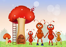 Family of red ants Stock Image
