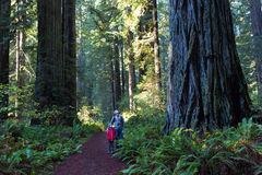 Family in redwood forest stock image