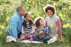 Family Relaxing In Field Of Spring Daffodils Stock Image