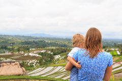 Family in rice fields Royalty Free Stock Photo