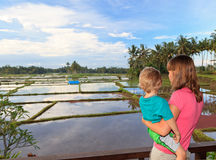 Family in rice fields Royalty Free Stock Photography