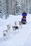 Family riding husky sledge at Lapland in winter Finnish forest Royalty Free Stock Photography