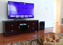 Family Room with TV and Dog Royalty Free Stock Photography