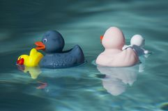 Family rubber duck toys in swimming pool. Closeup of family rubber duck toys in swimming pool stock photography