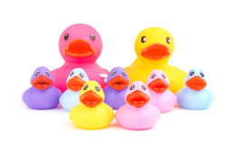 Family of rubber ducks, with parents on the background Stock Photo