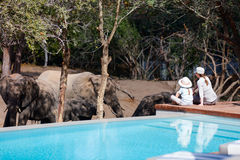 Family safari. Family of mother and child on African safari vacation enjoying wildlife viewing sitting near swimming pool royalty free stock photo
