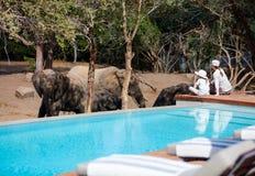 Family safari. Family of mother and child on African safari vacation enjoying wildlife viewing sitting near swimming pool stock photos