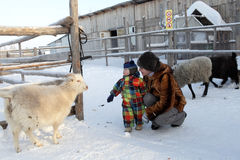 Family on a sheep farm. In winter, Tyumen, Russia Stock Photo