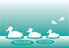 Family of silhouette ducks Royalty Free Stock Image