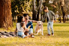 Family sitting on a blanket in a park while son is playing. With dog Royalty Free Stock Image