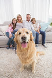 Family sitting on the couch with golden retriever in foreground Stock Photos