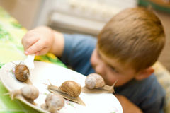 Family of snails. The boy played with snails. Family of snails Royalty Free Stock Images