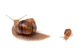 Family of snails Stock Images