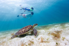 Family snorkeling with sea turtle. Underwater photo of family mother and son snorkeling and swimming with Hawksbill sea turtle royalty free stock image