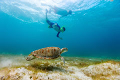 Family snorkeling with sea turtle Royalty Free Stock Images