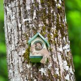 Family sparrow eating peanut butter. Hanging on the tree Royalty Free Stock Photography