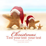 Family of starfish on summer beach and santa hat. Stock Images