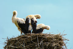 Family of storks. Is dried after the rain Stock Photography