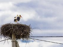 Family of storks made a nest on a telegraph pole in the village stock photo