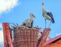 Family of storks royalty free stock photos