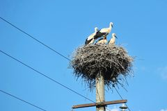 Family of storks sitting in a nest Stock Photos