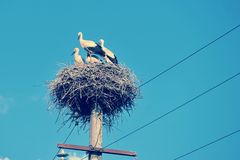 Family of storks sitting in a nest Stock Photo