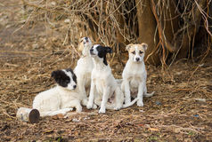 Family of stray puppies. Royalty Free Stock Photography