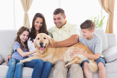 Family of stroking Golden Retriever Royalty Free Stock Photo