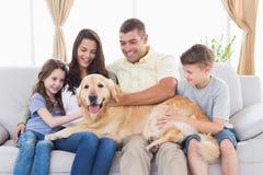 Family of stroking Golden Retriever Royalty Free Stock Photo