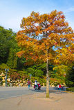 Family strolling in autumn park Royalty Free Stock Images