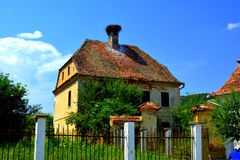 A family of strorks in the nest. Typical rural landscape in the village Vard, Wierd, Viert, Transylvania Stock Image