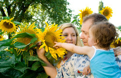 Family in sunflowers Royalty Free Stock Photos