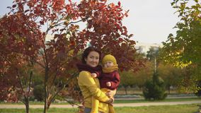 Family in sunny autumn park stock footage