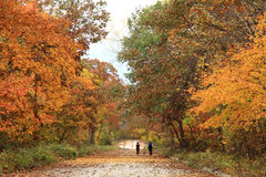 Family taking a walk under fall foliage Royalty Free Stock Photo