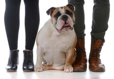 Family with their dog. Husband and wife with their bulldog on white background Stock Photos