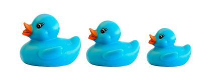 Family of three blue plastic duck. On a over white background stock photos
