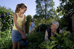 Family of three gardening, daughter (10-12) and father smiling at each other, low angle view Royalty Free Stock Image