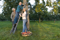 Family of three generations of women picking apples, smiling, portrait Royalty Free Stock Photos