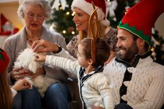Family for Christmas caress small dog. Family together for Christmas caress small cute dog Royalty Free Stock Photo