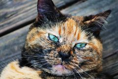 Family tortoise shell cat friend outside Stock Photos