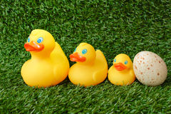 Family of toy ducks on grass. The composition of the family toy ducks and ostrich eggs on grass royalty free stock photos