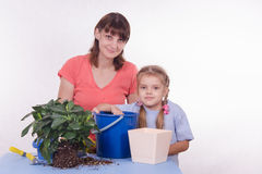 Family transplant houseplant Royalty Free Stock Photo