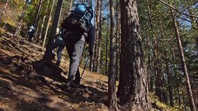 Family travels. People environment by mountains, rivers, streams. Parents and kids walk using trekking poles. Man and stock video