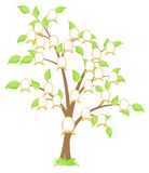 Family tree. Genealogical family tree. Green tree. Vector illustration, isolated on a white vector illustration